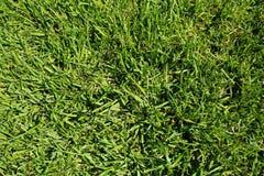 белизна предпосылки изолированная травой Стоковое Изображение