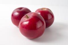 белизна предпосылки яблок красная top Стоковое Изображение