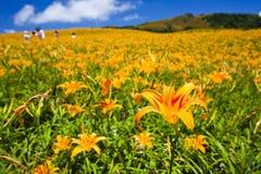белизна путя лилии клиппирования изолированная цветком Стоковое Изображение