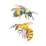 белизна пчелы предпосылки снятая макросом акварель вектор оса Стоковое Изображение
