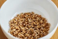 белизна пшеницы иллюстрации семенозачатка предпосылки Стоковое фото RF