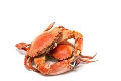 белизна рака предпосылки красная Сваренное мясо краба моря на белой предпосылке Стоковое Изображение