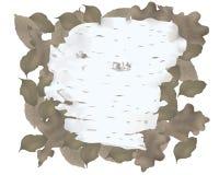 белизна расшивы изолированная березой Иллюстрация вектора