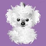 белизна собаки пушистая Стоковое Фото