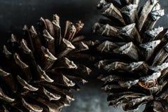 белизна сосенки предмета предпосылки изолированная конусами Стоковое Изображение