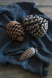 белизна сосенки предмета предпосылки изолированная конусами Стоковое фото RF