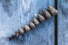 белизна сосенки предмета предпосылки изолированная конусами Стоковое Изображение RF