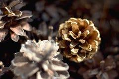 белизна сосенки предмета предпосылки изолированная конусами Стоковое Фото