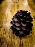 белизна сосенки предмета предпосылки изолированная конусами Стоковые Фото