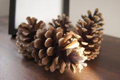 белизна сосенки предмета предпосылки изолированная конусами Стоковая Фотография RF