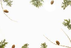белизна состава рождества предпосылки Зеленые хворостины туи, конусы сосны aarranged как венок Xmas Взгляд сверху, плоское положе стоковые изображения