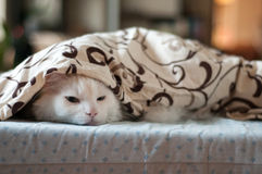 белизна спать кота Стоковые Фотографии RF