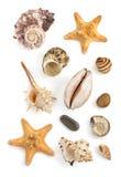 белизна студии съемки seashell предпосылки Стоковое фото RF