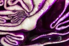 белизна текстуры предпосылки изолированная капустой красная Стоковое Фото