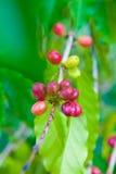 белизна урожая кофе мешка предпосылки польностью изолированная Стоковое фото RF