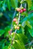 белизна урожая кофе мешка предпосылки польностью изолированная Стоковое Фото