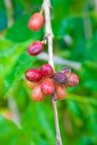 белизна урожая кофе мешка предпосылки польностью изолированная Стоковые Фото