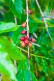 белизна урожая кофе мешка предпосылки польностью изолированная Стоковая Фотография