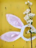 белизна ушей зайчика предпосылки изолированная пасхой Стоковые Изображения RF
