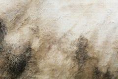 Белизна фильтра Texturizer пакостная устрашает предпосылку меха Стоковые Изображения