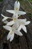 белизна цветка Стоковое фото RF