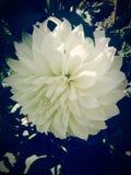 белизна цветка стоковое фото