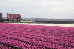белизна цветков розовая Стоковые Фото