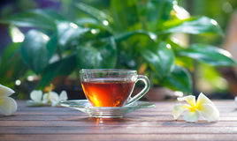 белизна чая предпосылки изолированная чашкой Стоковая Фотография