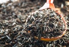 белизна чая предпосылки изолированная hibiscus Стоковые Фотографии RF