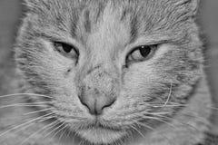 белизна черного кота Стоковое Изображение