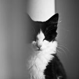 белизна черного кота Стоковые Фото