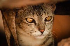 белизна черного кота стоковое изображение rf