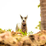 белизна черной собаки стоковое фото