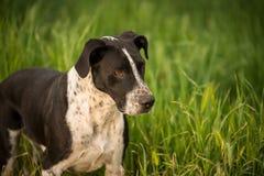 белизна черной собаки Стоковые Фото