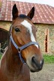 белизна 8 eps головной изолированная лошадью Стоковая Фотография RF
