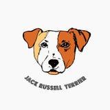 белизна terrier russell jack предпосылки Стоковые Фотографии RF
