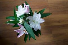 Белизны цветок lilly Стоковое Изображение RF