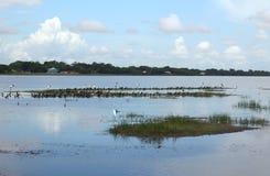 Белиз, святилище Birding мира Стоковые Изображения RF