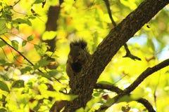 Белка в дереве стоковое фото rf