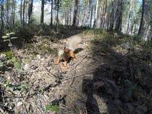 Белка в лесе Стоковые Фото