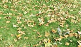 Белка в саде с упаденными листьями Стоковое фото RF