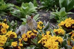 Белка в цветках Стоковая Фотография