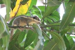 Белка на дереве Стоковое Фото