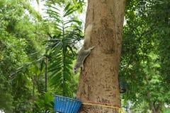 Белка на дереве Стоковые Фото