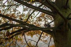 Белка на дереве Стоковое Изображение