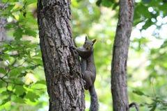 Белка на дереве стоковое фото rf