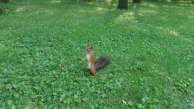 Белка на траве Стоковая Фотография