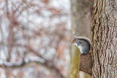 белка парка холодная зима дня Стоковые Фото