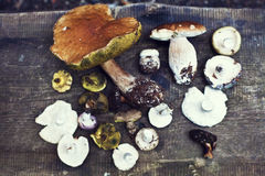 белка пущи s хлеба подосиновика edulis Подосиновик edulis съестной гриб Белый гриб на деревянной предпосылке взгляд сверху - здор Стоковая Фотография