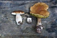 белка пущи s хлеба подосиновика edulis Подосиновик edulis съестной гриб Белый гриб на деревянной предпосылке взгляд сверху - здор Стоковые Изображения RF